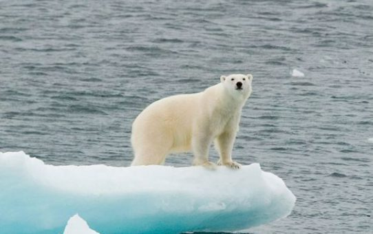 UN report delivers dire warning on climate change